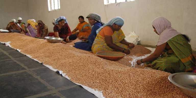 Establishing commodity cooperatives – crucial role of member stakes
